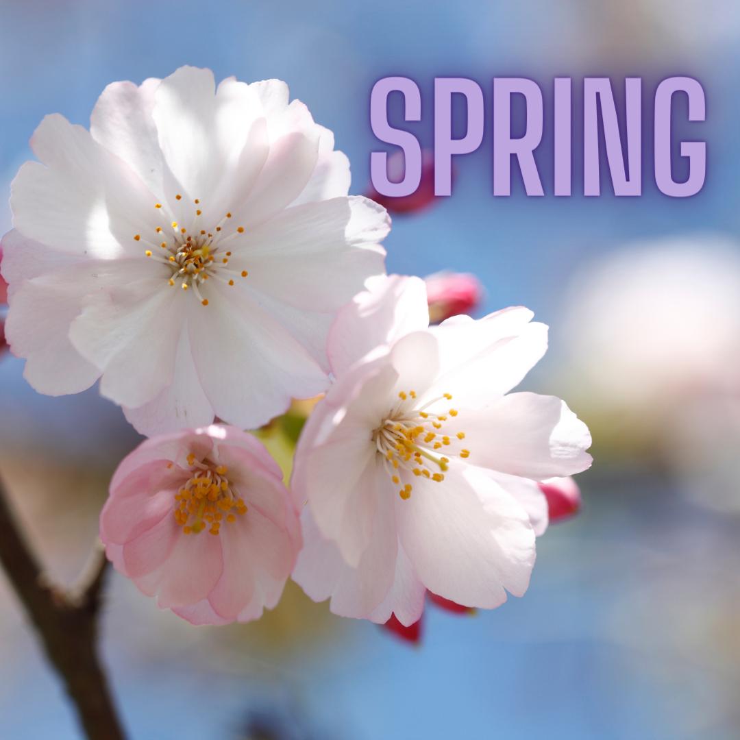 Spring - flowers blooming